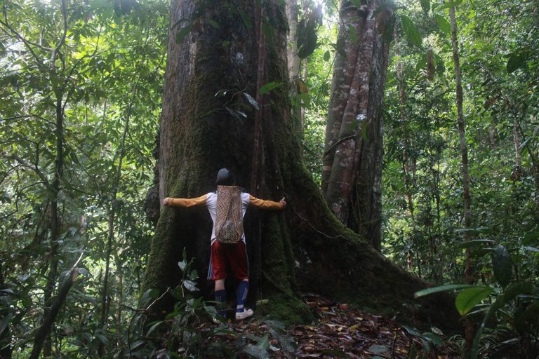 Securing territorial rights – Protecting forests and rivers